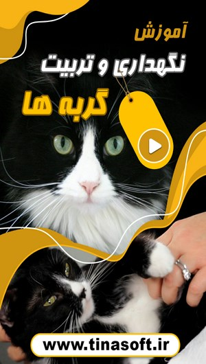 آموزش نگهداری و تربیت گربه ها